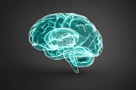 3d illustration of human brain over dark background with soft shadow.