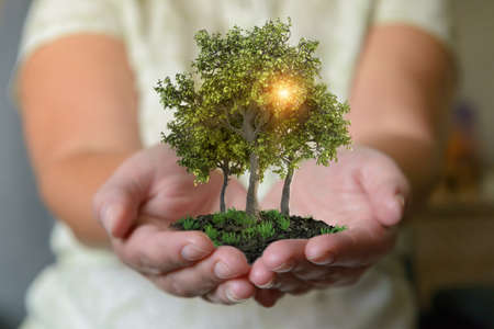 Woman's hands holding trees, natural and ecological life style concept, gardening in pure, healthy environment Imagens