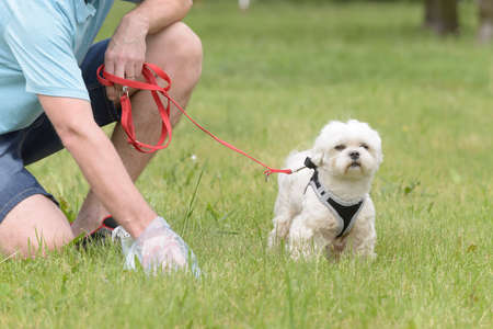 Owner cleaning up after the dog with plastic bag Stock Photo