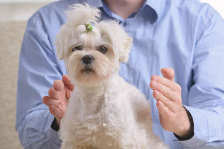 Man doing Reiki therapy for a dog, a kind of energy medicine. Stock Photo