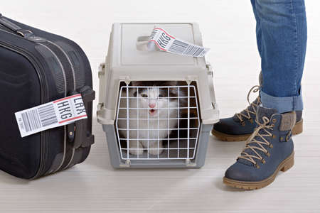 Cat in the airline cargo pet carrier waiting at the airport after a long journey Foto de archivo