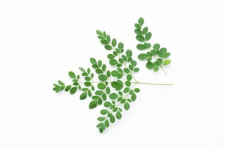 oleifera: Hoja verde aislado en el fondo blanco, Moringa oleifera Lam