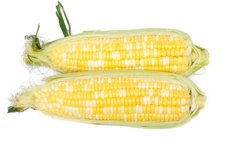 白い背景の上の原料の二色トウモロコシ