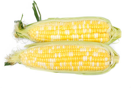 raw bicolor corn on white background