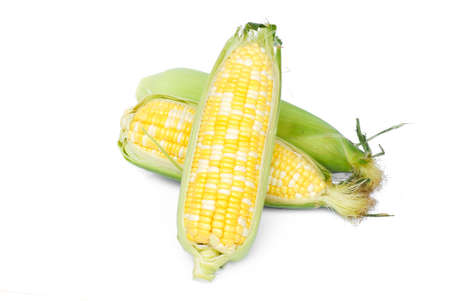 bi-color corn isolated on white