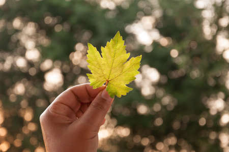 man hand hold grape leaf with bokeh background photo