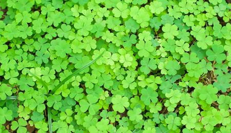 cloverleafes: Orso Clover Leaf Green