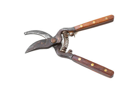 hedge clippers: Gardening: Shears