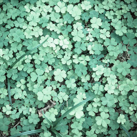 fortunateness: Bear Clover Leaf Green