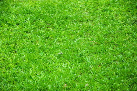 grass: Grass Stock Photo
