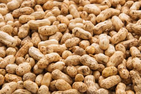 pygmy nuts: Peanuts In Shells