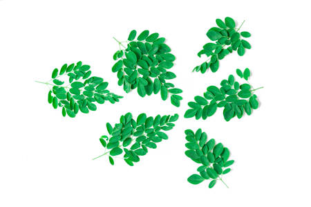 laxatives: Green leaf of Horse radish tree, Drumstick. (Moringa oleifera Lam.) Thailand Stock Photo