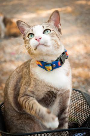playful cat photo
