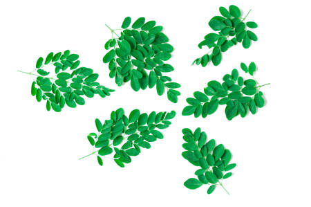 laxatives: Green leaf of Horse radish tree, Drumstick. (Moringa oleifera Lam.) Thailands herbal medicinal properties. Stock Photo