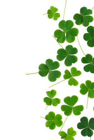 fortunateness: Bear Clover Leaf Green, background Stock Photo