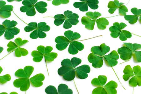 Bear Clover Leaf Green, background photo
