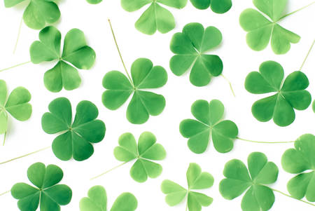 Bear Clover Leaf Green of a St. Patricks Day Background photo