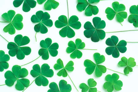 Bear Clover Leaf Green, background photo