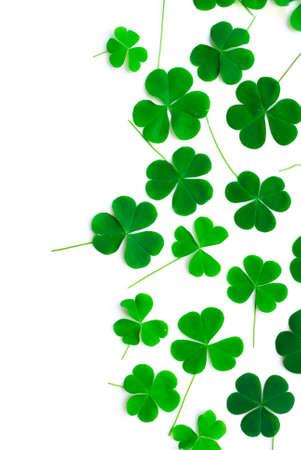 cloverleafes: Orso Clover Leaf Green Day di sfondo di San Patrizio