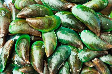 viridis: Asian green mussel was displayed and sale in Thailand street market