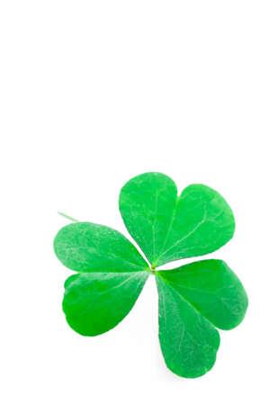 three leaf: Shamrock,three leaf clover