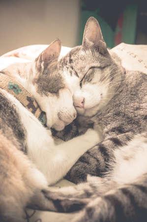 cats: Gatti