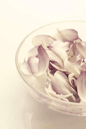 bowel: lotus petals in water bowel, spa concept Stock Photo