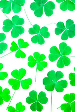 cloverleafes: Orso Clover Leaf Green, fondo Archivio Fotografico