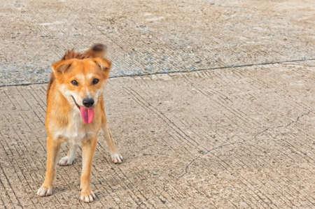 solter�a: perro sin hogar