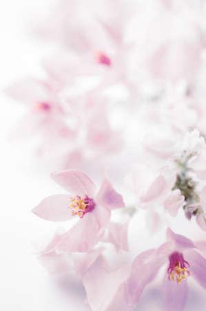 borde de flores: Coral Vine, la enredadera de M�xico, frontera de la flor, fondo Foto de archivo