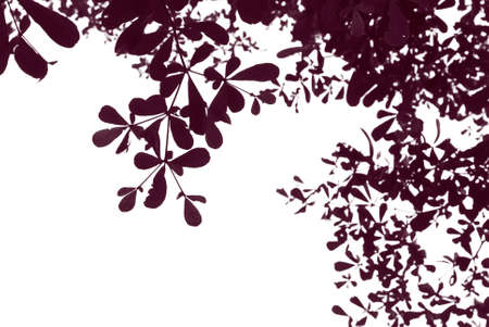 Abstract pattern from silhouettes of leaves photo