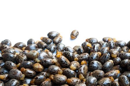 Castor oil seeds-ricinus communis photo