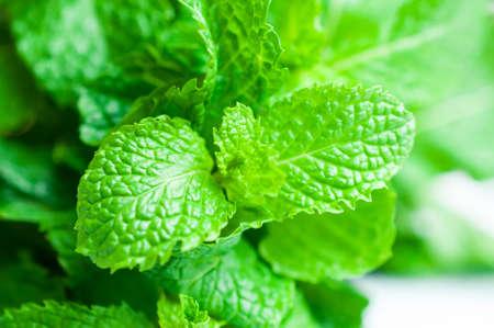 leaf close up: Mint leaf close up background Stock Photo