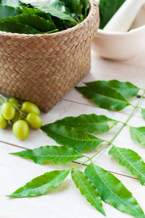 neem: Mortar and pestle with medicinal neem leaves over white