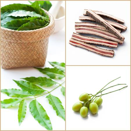neem: Medicinal neem fruit leaves and bark on white background