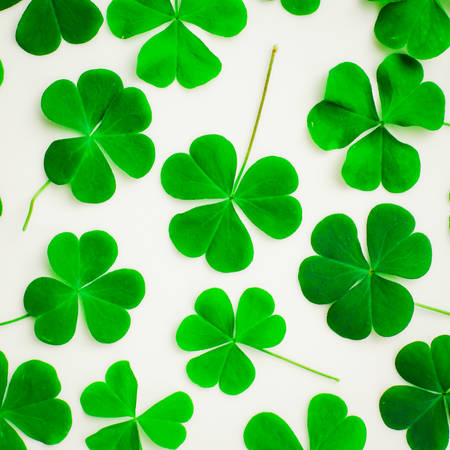 luckiness: Bear Clover Leaf Green of a St. Patricks Day Background