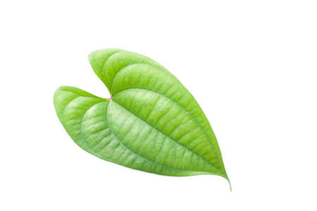 Yam leaf isolated Stock Photo