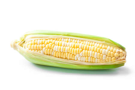sweet corn, bi-color