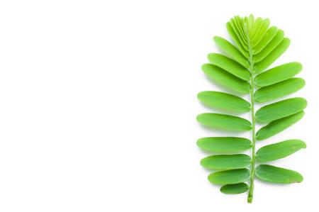 gooseberry: Indian Gooseberry, Phyllanthus Emblica leaf