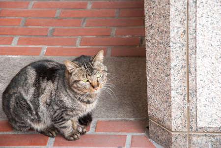 gray cat: Adorable gray cat