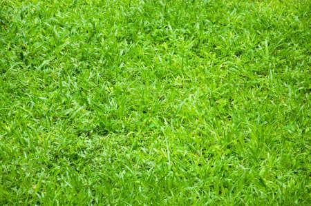 Grass Stock fotó