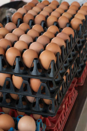 albumen: Eggs in the package