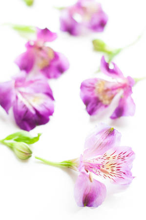 Alstroemeria flower on isolated Reklamní fotografie
