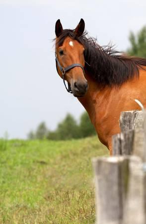 horse on freedom photo