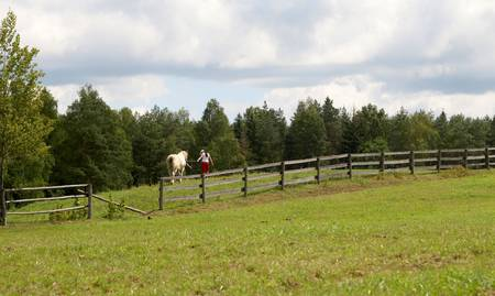 paddock: guide horse on paddock Stock Photo