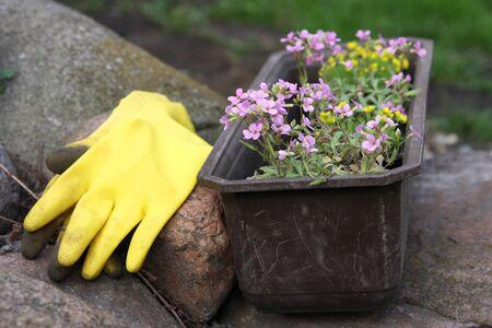 flowers and equipment in garden Stock Photo - 2982168