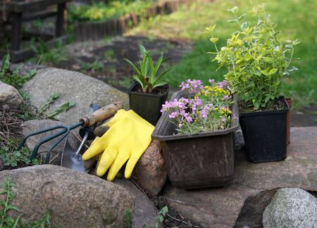 fowers and equipment in garden