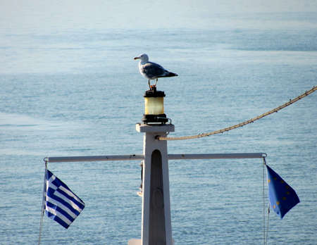 Seagull is sitting on the top of ferryboat, Greece Stock Photo