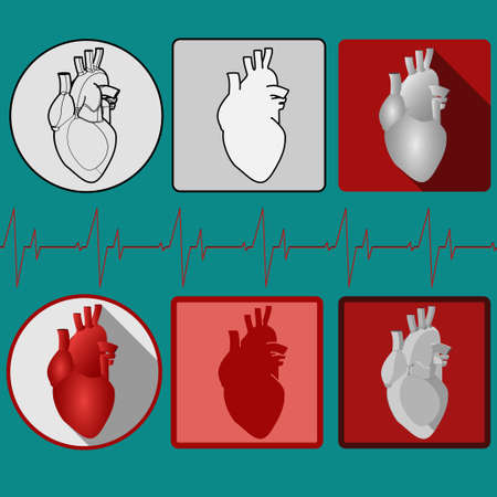 human heart anatomy: Human heart icon with cardiogram. Medical icon. Vector Pictogram