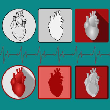 corazon humano: Icono del coraz�n humano con el cardiograma. Icono m�dico. Vector Pictograma Vectores